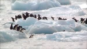 antarctic-peninsula-free-use