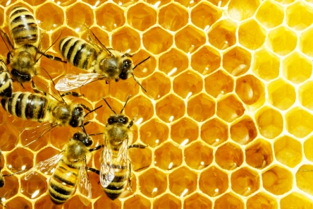 bees (1)