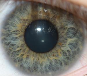 ColourIris-eye-biometrics