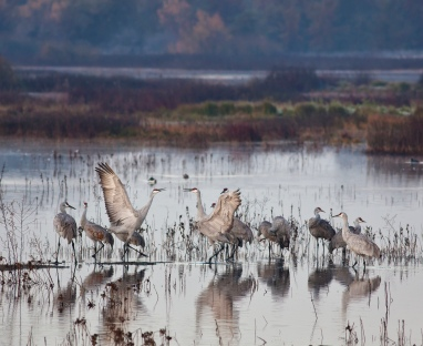 BLM_Winter_Bucket_List_-9-_Cosumnes_River_Preserve,_California,_for_the_Trumpet_and_Dance_of_the_Sandhill_Crane_(16151065541).jpg