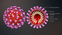 1280px-3D_medical_animation_coronavirus_structure
